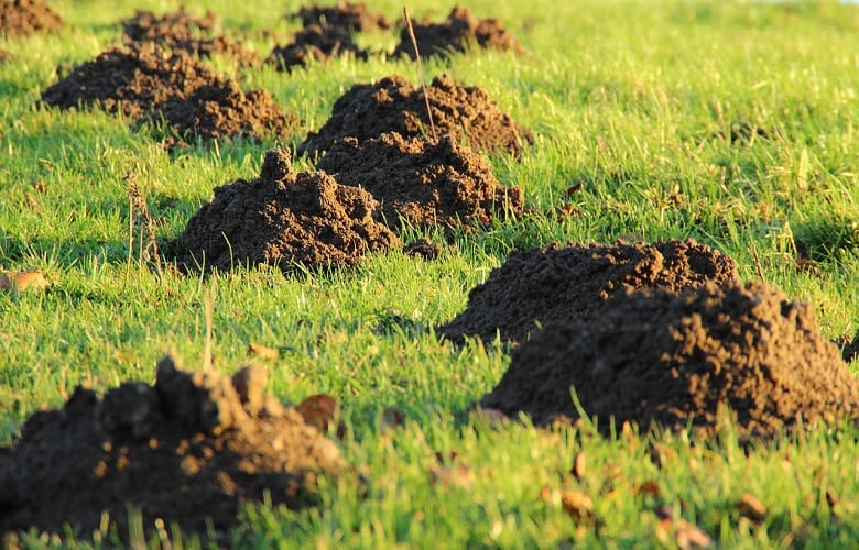 How To Stop Animals From Digging Holes In Yard
