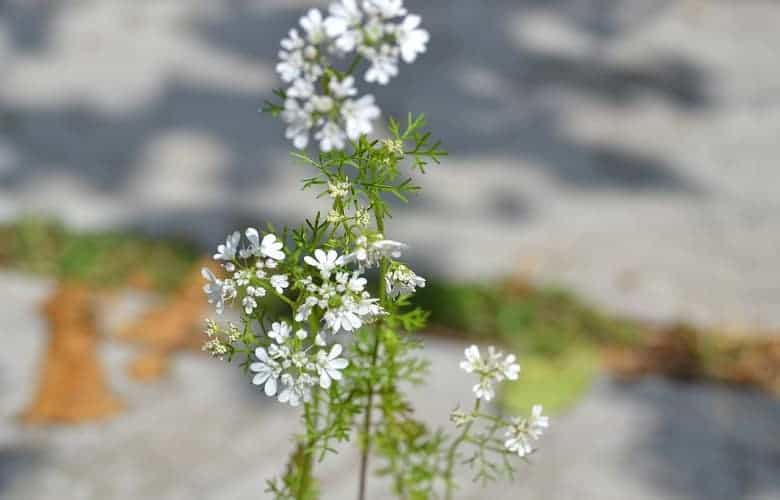 What herbs can be planted together
