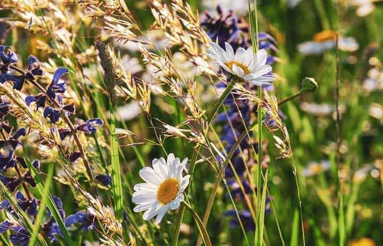 Sage Grass